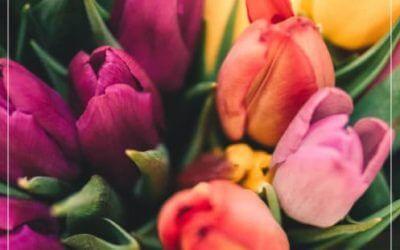Alles neu macht der Mai